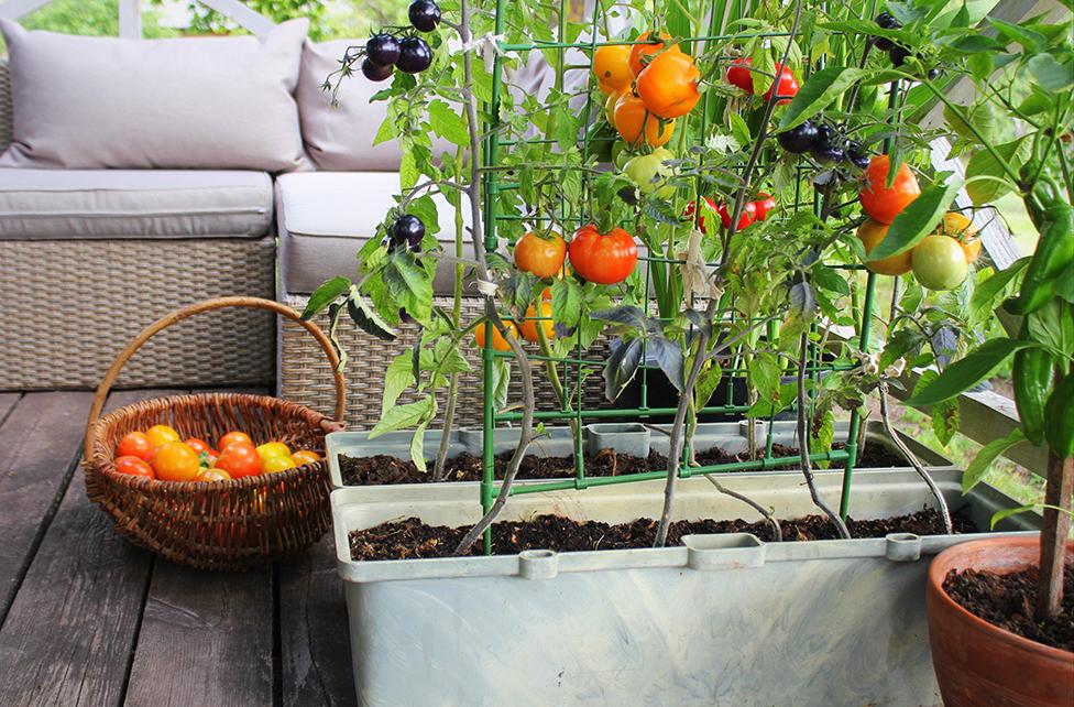 balcony gardening no1 Millbrook park nw7